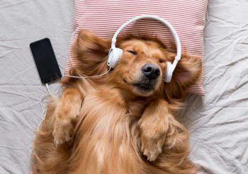 Música, el complemento perfecto para la terapia de tu mascota